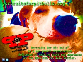 Portraits For Pit Bulls Psychedelic Promo
